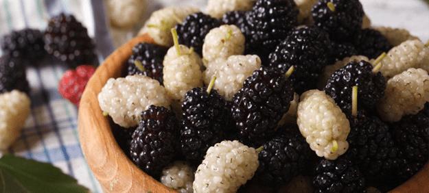festival-mulberry-nkr