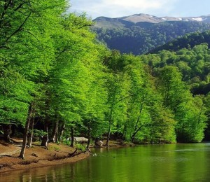 Things To Do in Dilijan