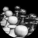 skipper chess