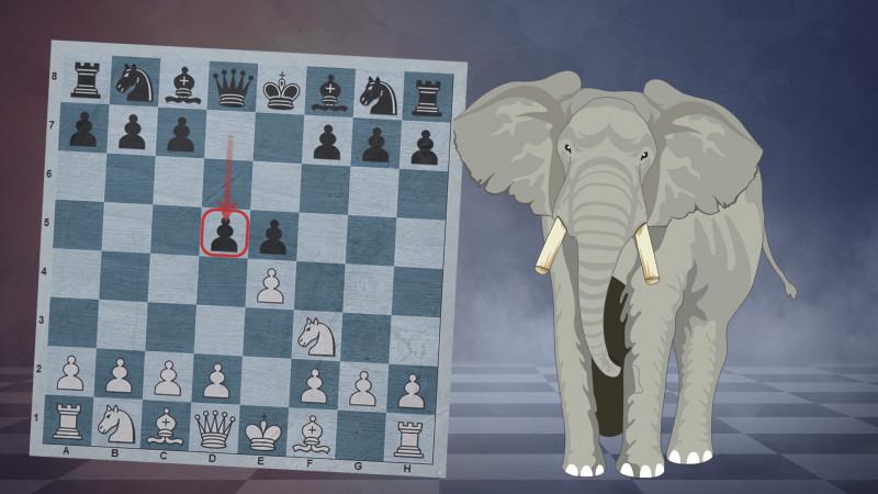Elephant Gambit | The Refutation